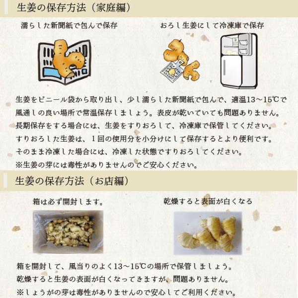 【青果】食用 中国産 黄金生姜 近江生姜 黄 1kg shougakoubou 03
