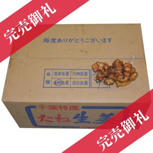 【種生姜】千葉県産 金時生姜 10kg|shougakoubou