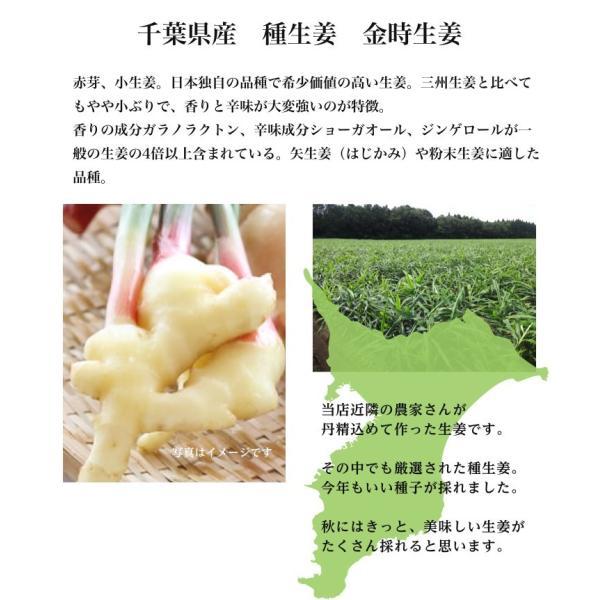 【種生姜】千葉県産 金時生姜 10kg|shougakoubou|02