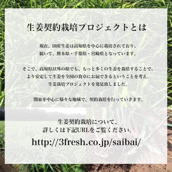 【種生姜】千葉県産 金時生姜 10kg|shougakoubou|11