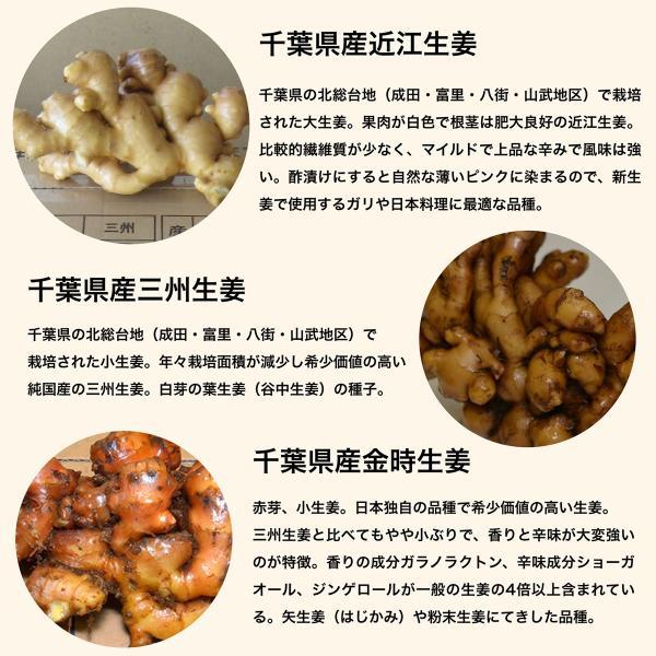 【種生姜】千葉県産 金時生姜 10kg|shougakoubou|09