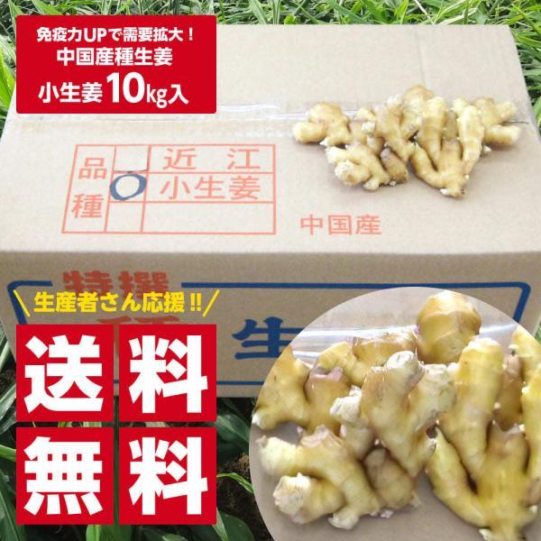 【種生姜】中国産 小生姜 10kg|shougakoubou