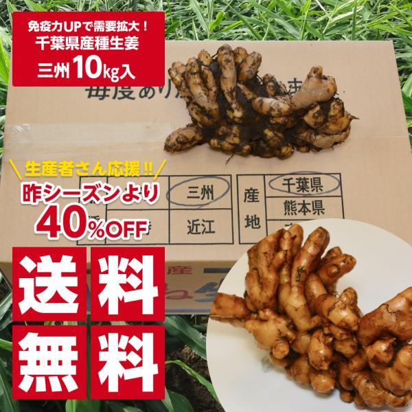 【種生姜】千葉県産 三州生姜 10kg|shougakoubou