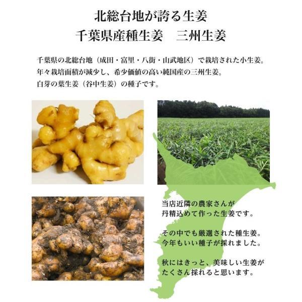 【種生姜】千葉県産 三州生姜 10kg|shougakoubou|05