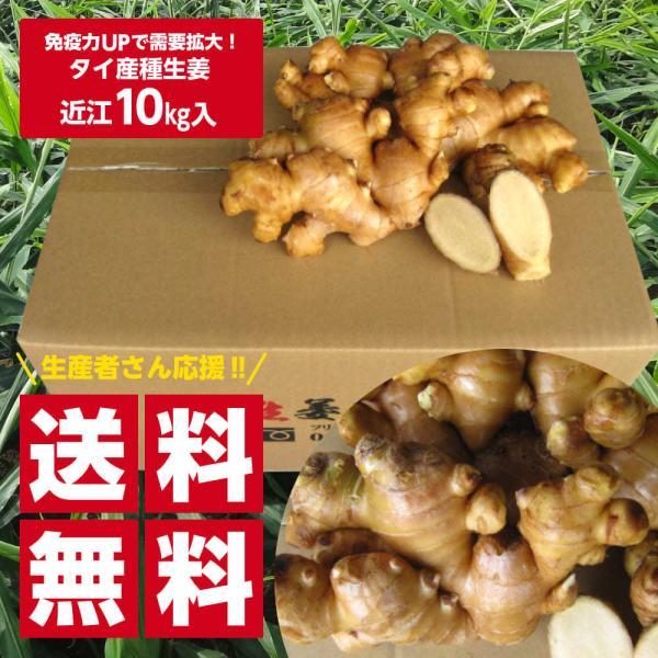 タイ産 近江生姜(白)10kg ※種生姜としてもお使いいただけます[生姜種 たね生姜 生姜の種 生姜栽培]|shougakoubou