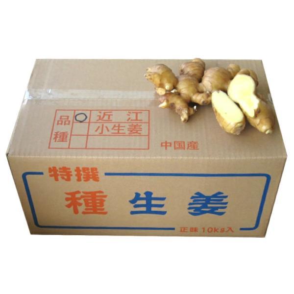 【種生姜】中国産 近江生姜(黄)10kg [生姜種 たね生姜 生姜の種 予約販売 生姜栽培 ショウガ しょうが 栽培]|shougakoubou