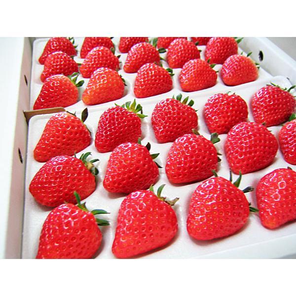 夏いちご 2L-L(300g・15〜24粒)×4トレー(計1.2kg)北海道産 夏イチゴ 出荷期間:6〜12月