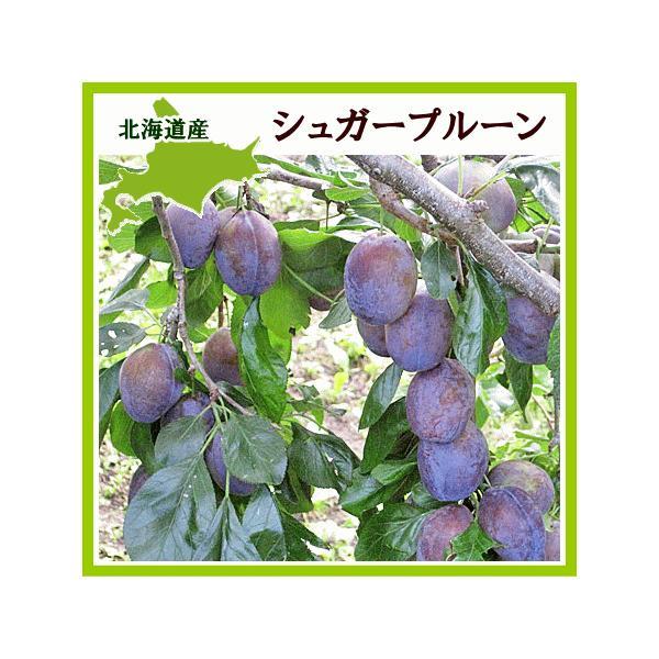 プルーン シュガー 1Kg(生果実 500g×2)北海道産 出荷時期:10月