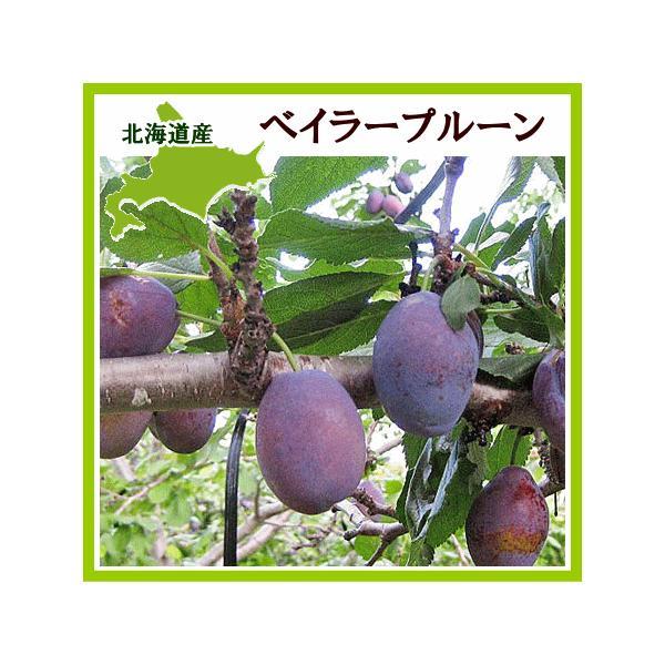 プルーン ベイラー 1Kg(生果実 500g×2) 北海道産  出荷時期:10月