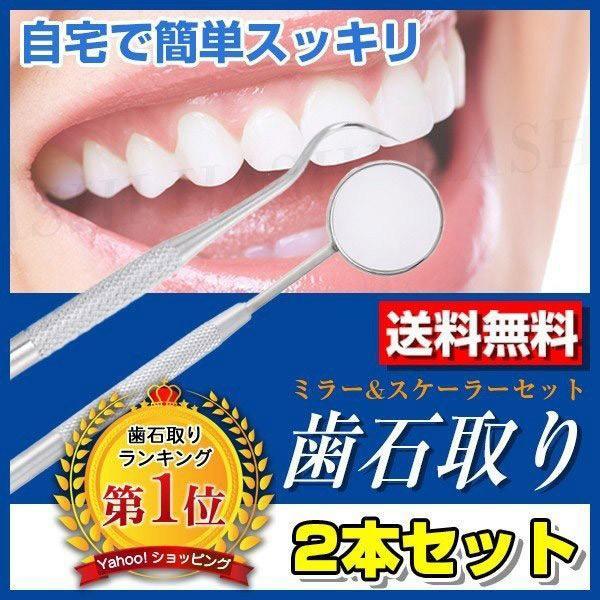 歯石取り 自分で取る 除去 器具 歯垢 とり 2本セット 犬 猫 ペットにも 自宅で|sinc