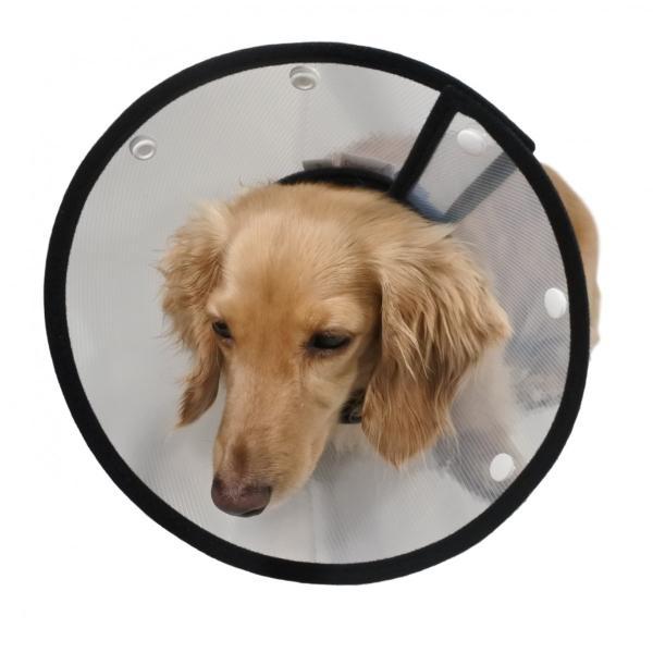 エリザベスカラー 犬 ソフト 猫 カラー 犬用 猫用 クリア 介護 軽量 大型犬 小型犬 中型犬|smile701|09
