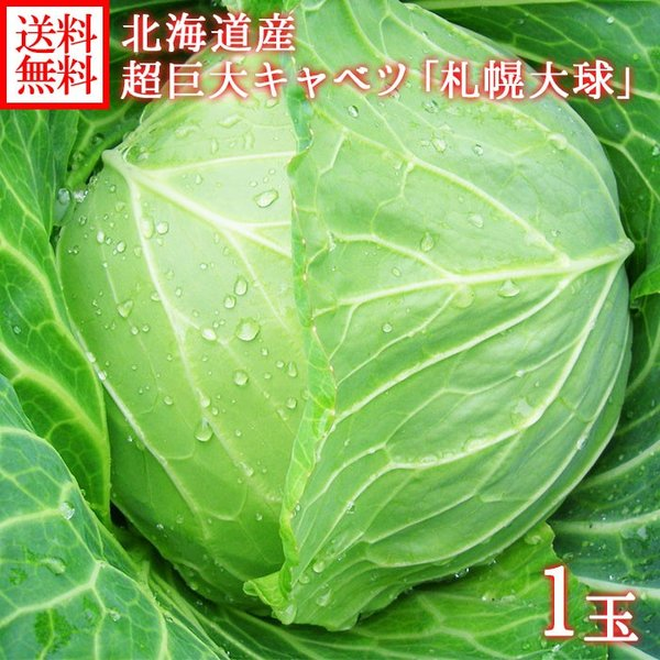 キャベツ 札幌大球 北海道 1玉 7-10kg 巨大キャベツ 野菜 ギフト プレゼント 食べ物 産地直送 ご当地グルメ