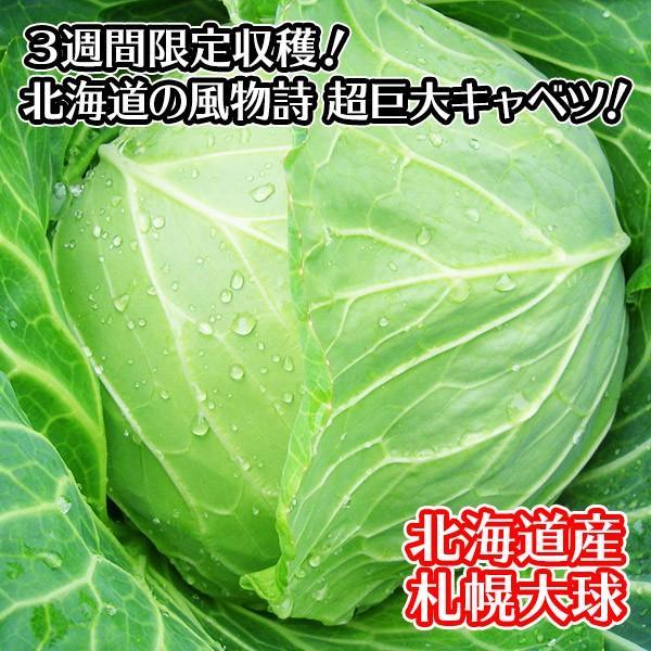 キャベツ 札幌大球 北海道 1玉 7-10kg 巨大キャベツ 野菜 ギフト 産地直送 ご当地グルメ Gift|snowland|02