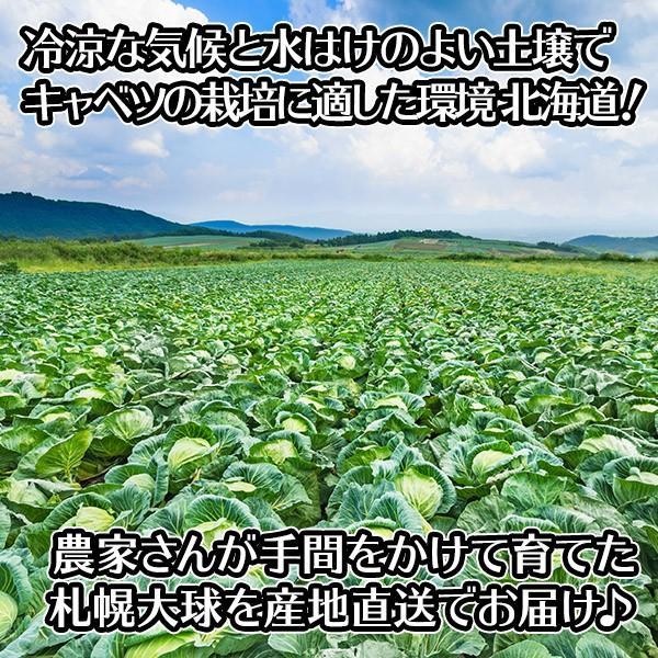 キャベツ 札幌大球 北海道 1玉 7-10kg 巨大キャベツ 野菜 ギフト 産地直送 ご当地グルメ Gift|snowland|04