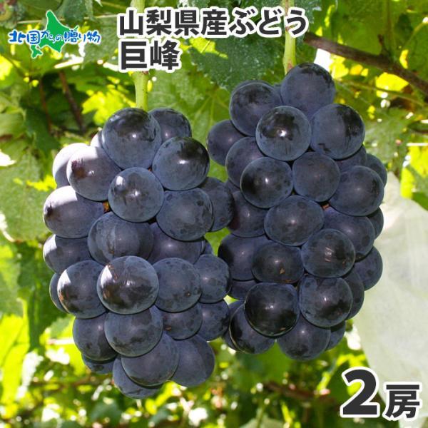 巨峰 山梨県産 フルーツ ギフト 果物 旬 ブドウ 500gx2房 葡萄 ぶどう お取り寄せ プレゼント 食べ物 8月中-9月上