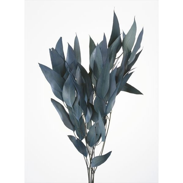 そらプリ 花材 ウィロー ユーカリ ブルー グリーン 小分け 1/4袋 大地農園 ドライフラワー 材料 資材