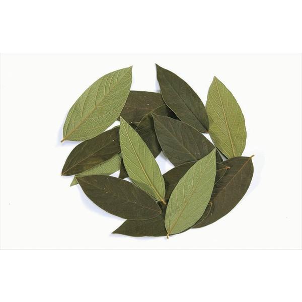 ベルベットリーフ 約5〜11cm グリーン x1-oh-01300-700 大地農園|solargift