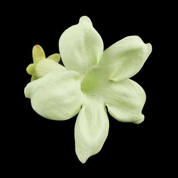 大地農園 ジャスミン フレッシュグリーン 小分け 1輪入 プリザーブドフラワー 材料 花材 preserving solargift 02