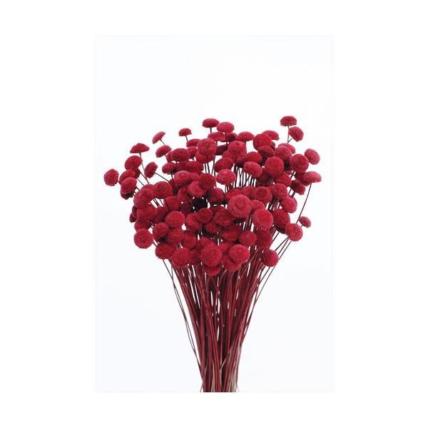 ボタンフラワー チェリーレッド 小分け 約1/3〜1/4袋 花材 ハーバリウム プリザーブドフラワー 大地農園