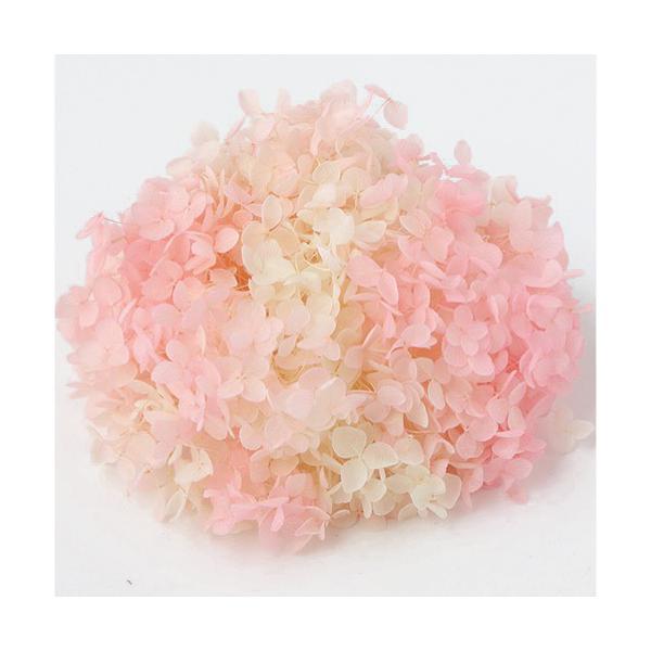 プリザーブドフラワー 花材 アジサイ アナベルパルフェ ピンクフロート 箱 約2.5輪|solargift