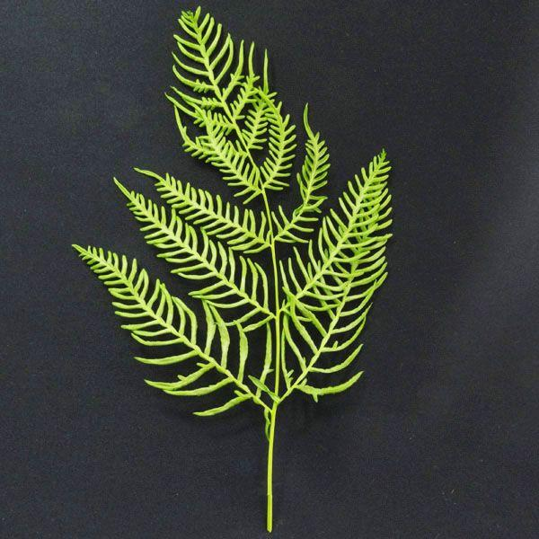 ブラッケンファーン シダ 羊歯 グリーン 袋 10枚入 プリザーブドフラワー 花材 大地農園|solargift