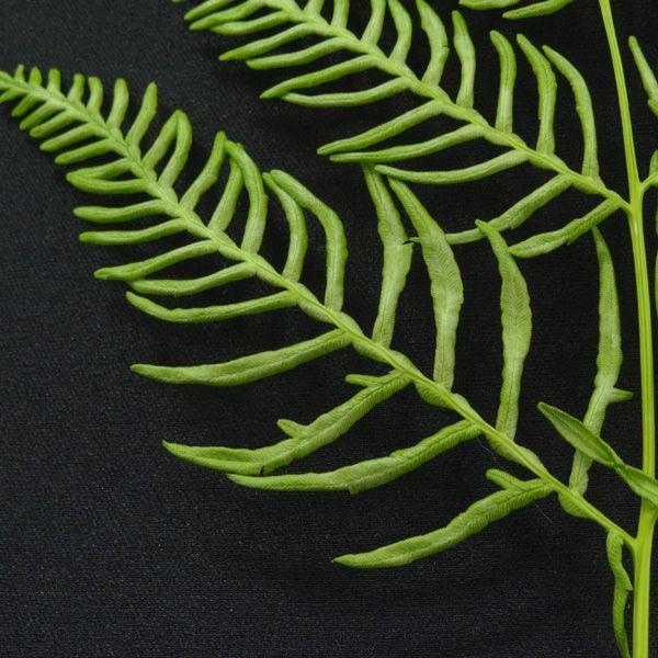 ブラッケンファーン シダ 羊歯 グリーン 袋 10枚入 プリザーブドフラワー 花材 大地農園|solargift|02