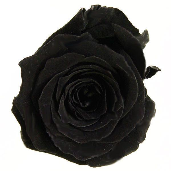 プリンセスローズ ブラック 箱 16輪入 プリザーブドフラワー 材料 花材|solargift|03