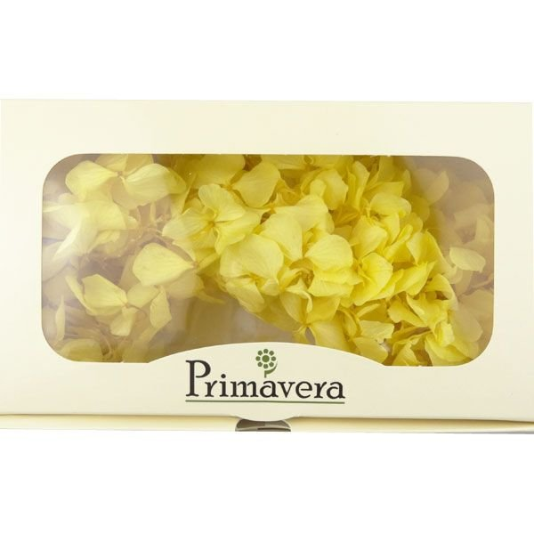 プリザーブドフラワー 材料 花材 HYDRAGEA アジサイ レモン 箱 2輪入 solargift