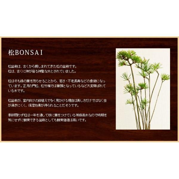 ミニ盆栽 クロ松 盆栽(bonsai ボンサイ) 翠松園 撰*o-M-bonsai_009* somurie 02