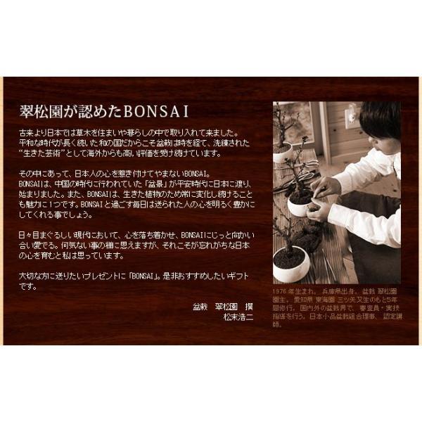 ミニ盆栽 クロ松 盆栽(bonsai ボンサイ) 翠松園 撰*o-M-bonsai_009* somurie 04