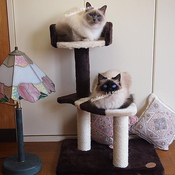 猫のおあそびポール お魚ファミリー ロータイプ 高さ71.5cmサンキャッチャー|soulmate-lotus