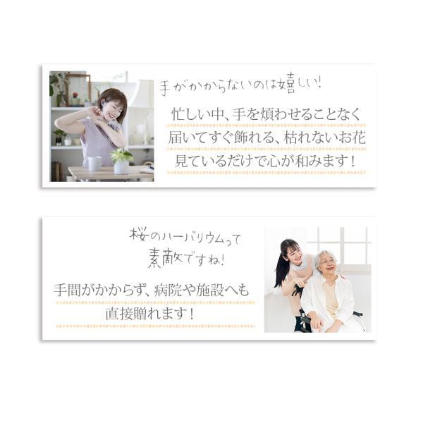 ハーバリウム(植物標本) 中瓶 /プリザーブドフラワー ドライフラワー  誕生日 プレゼント ギフト 結婚祝い 父の日|springch|06