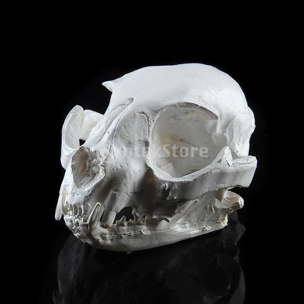 【ノーブランド 品】樹脂 リアル レプリカ 動物 猫 頭蓋骨 モデル 医療 パーティー バー プロップ インテリア stk-shop