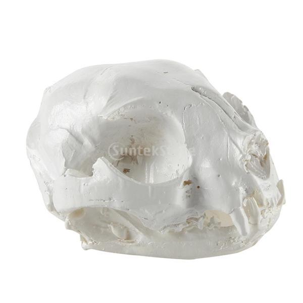 【ノーブランド 品】樹脂 リアル レプリカ 動物 猫 頭蓋骨 モデル 医療 パーティー バー プロップ インテリア|stk-shop|02