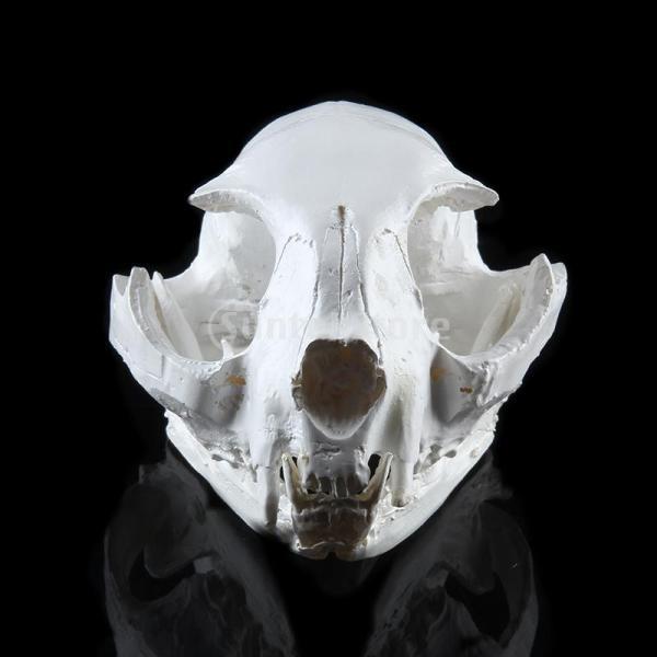 【ノーブランド 品】樹脂 リアル レプリカ 動物 猫 頭蓋骨 モデル 医療 パーティー バー プロップ インテリア|stk-shop|06