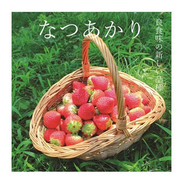 (訳あり)良食味の新しい夏秋イチゴ(秋田県産なつあかり)1kg(市販4pc分) 無選別品詰め合わせ|strawberryfarm|02