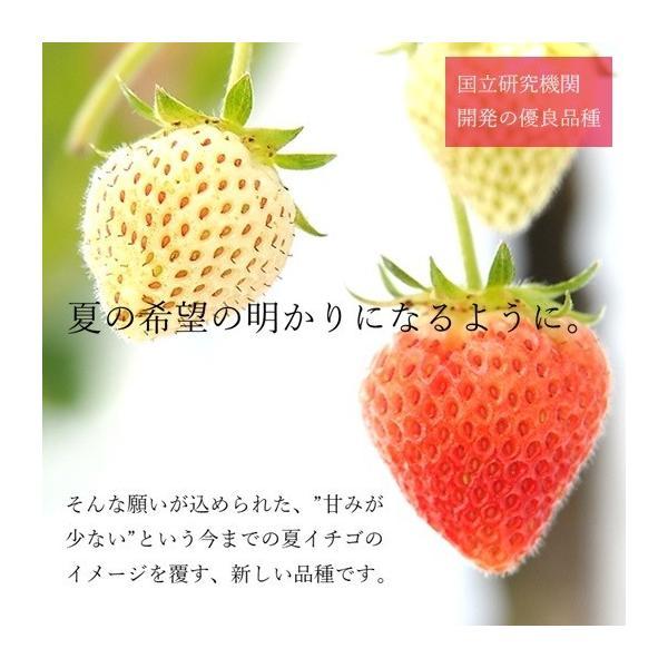 (訳あり)良食味の新しい夏秋イチゴ(秋田県産なつあかり)1kg(市販4pc分) 無選別品詰め合わせ|strawberryfarm|03