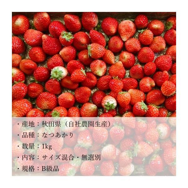 (訳あり)良食味の新しい夏秋イチゴ(秋田県産なつあかり)1kg(市販4pc分) 無選別品詰め合わせ|strawberryfarm|04