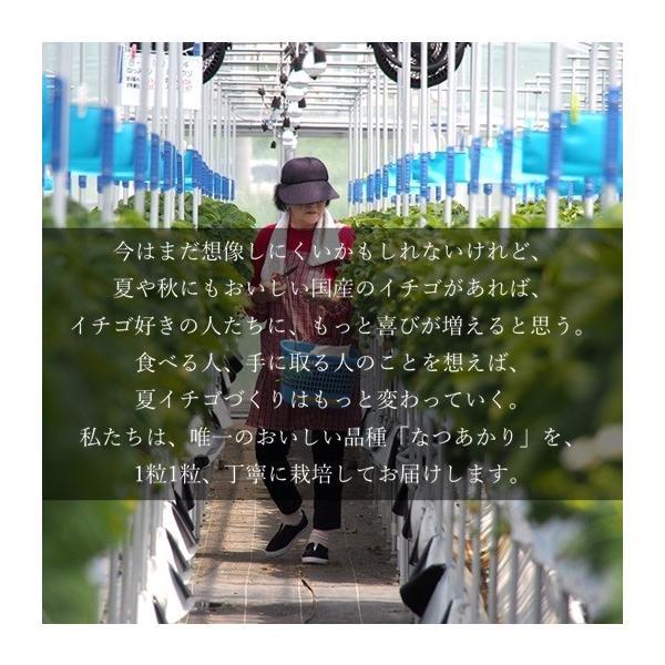 (訳あり)良食味の新しい夏秋イチゴ(秋田県産なつあかり)1kg(市販4pc分) 無選別品詰め合わせ|strawberryfarm|06