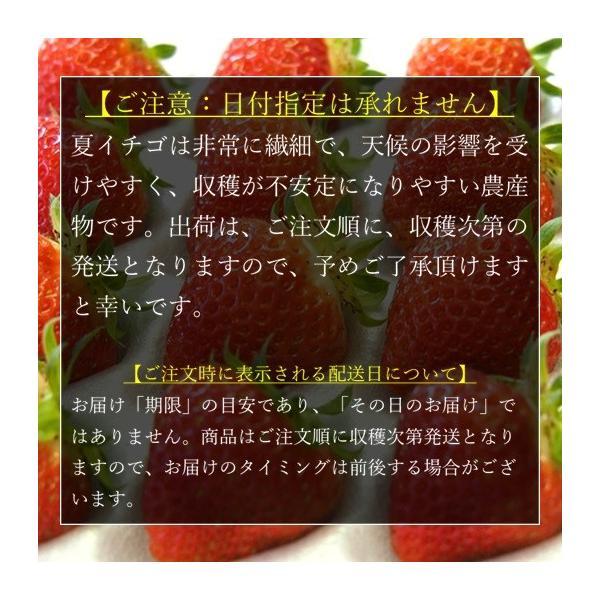 (訳あり)良食味の新しい夏秋イチゴ(秋田県産なつあかり)1kg(市販4pc分) 無選別品詰め合わせ|strawberryfarm|08