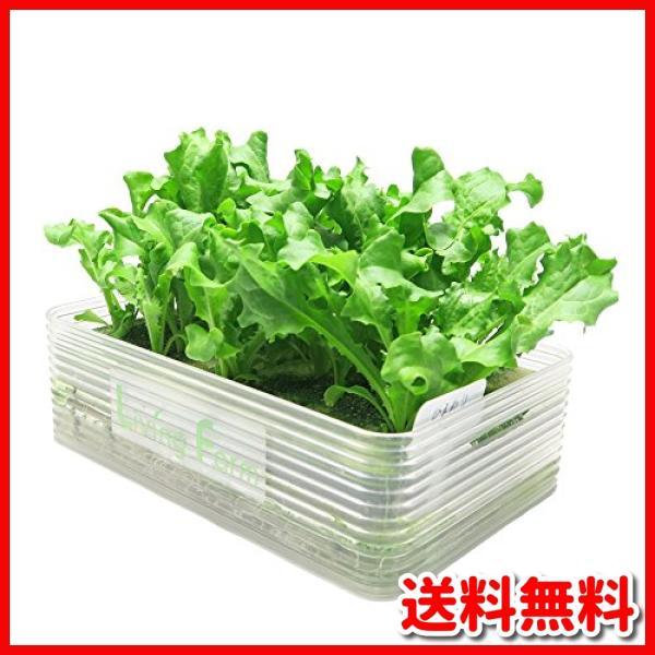 リビングファーム ミニ水耕菜園キットBE ベビーエンダイブ(栄養一杯)