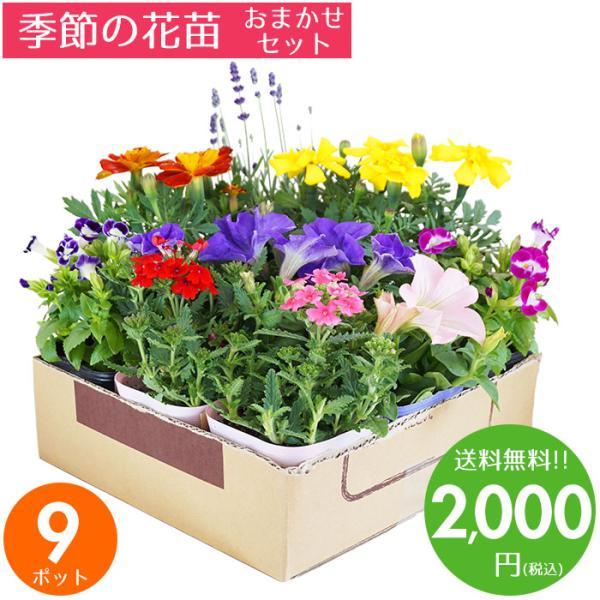 花苗 冬 セット ガーデニングに最適です♪季節の花苗おまかせ9ポット 送料無料 沖縄・離島を除く