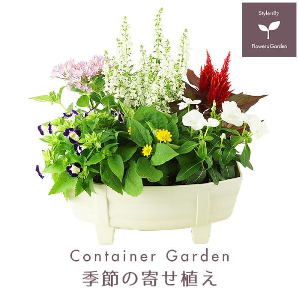 季節の寄せ植え 夏 おしゃれなタル型鉢 白 送料無料 沖縄・離島を除く style1187