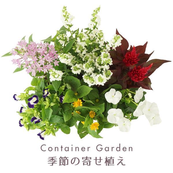 季節の寄せ植え 夏 おしゃれなタル型鉢 白 送料無料 沖縄・離島を除く style1187 02