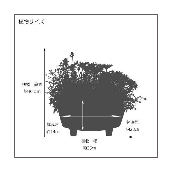 季節の寄せ植え 夏 おしゃれなタル型鉢 白 送料無料 沖縄・離島を除く style1187 11