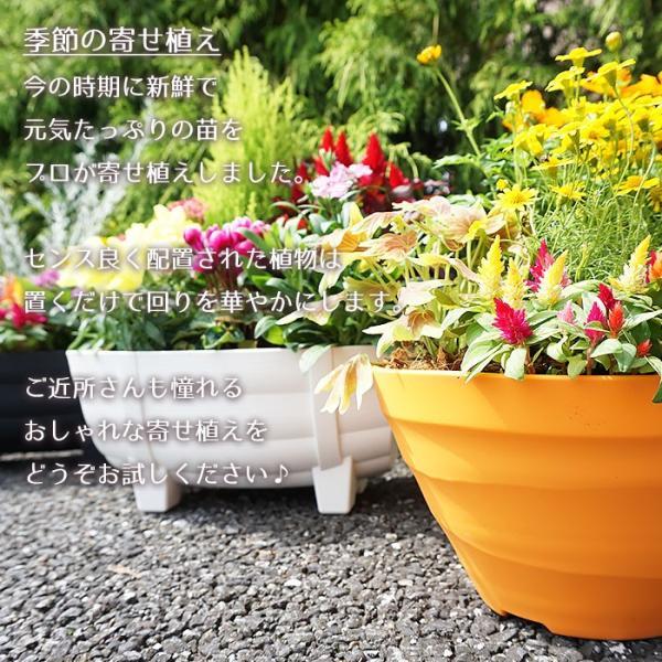 季節の寄せ植え 夏 おしゃれなタル型鉢 白 送料無料 沖縄・離島を除く style1187 03