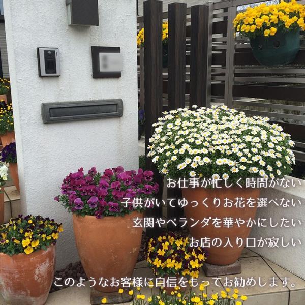 季節の寄せ植え 夏 おしゃれなタル型鉢 白 送料無料 沖縄・離島を除く style1187 04