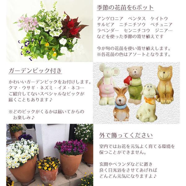 季節の寄せ植え 夏 おしゃれなタル型鉢 白 送料無料 沖縄・離島を除く style1187 06