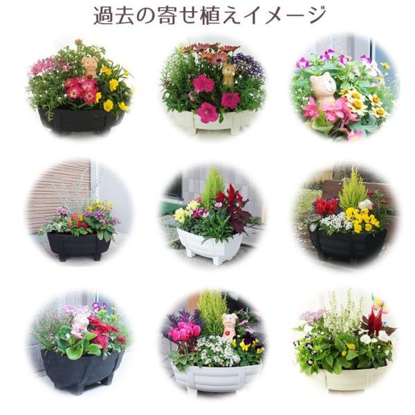 季節の寄せ植え 夏 おしゃれなタル型鉢 白 送料無料 沖縄・離島を除く style1187 07