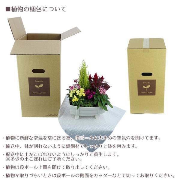 季節の寄せ植え 夏 おしゃれなタル型鉢 白 送料無料 沖縄・離島を除く style1187 09